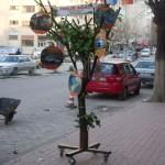 AKP Adayı Mehmet Ermiş'in Proje Ağacı