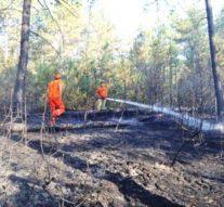 Piknik Ateşi 20 Dönümlük Çam Ormanını Yok Etti